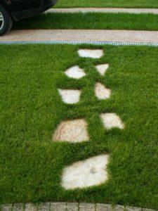 trawnik i scieżka