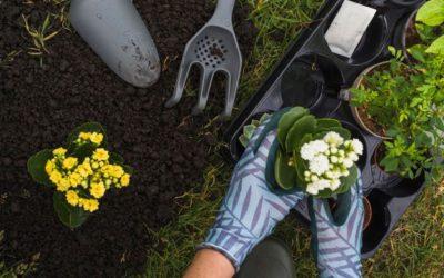 Pielęgnacja ogrodu – na czym polega i co jest ważne?